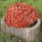 Квітник 66х45 см 5